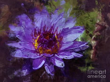 Biltmore Estate Water Lily Garden #2 by Jack Gannon