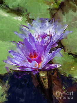 Biltmore Estate Water Lily Garden #3 by Jack Gannon