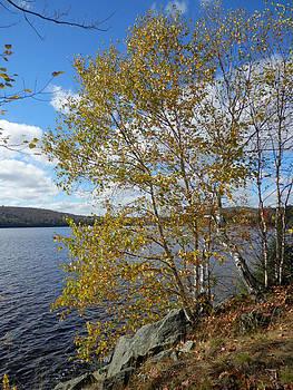 Birch and Lake 1 by Pema Hou