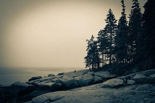 Birch Point View by Belinda Dodd