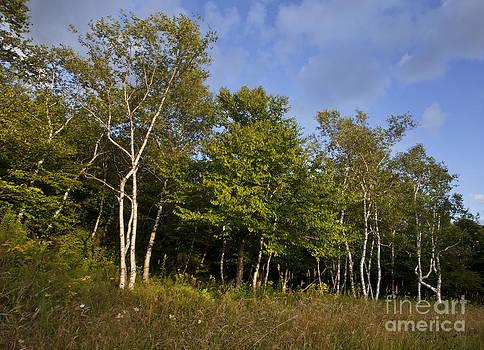 Jonathan Welch - Birch Tree Grove