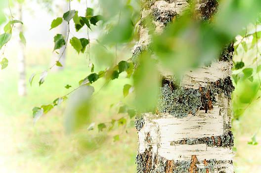 Jenny Rainbow - Birch Tree. The Soul of Russian Nature