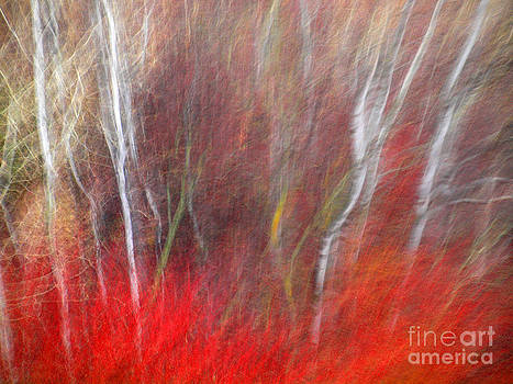 Birch Trees Abstract by Tara Turner