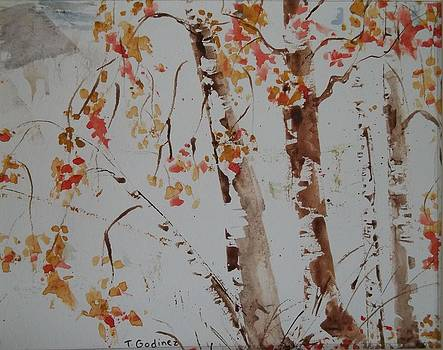 Birch Trees in the fall by Terry Godinez