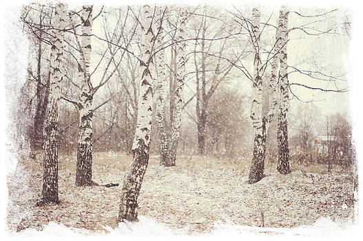 Jenny Rainbow - Birch Trees in the Snow. Winter Poems