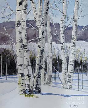 Birch Trees in Winter by Carol Flagg
