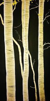 Birch Trees by Marina Hanson