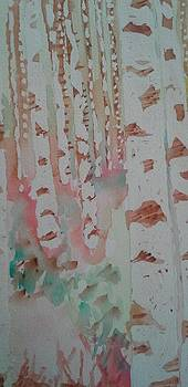 Birch Trees by Rachel Tilseth