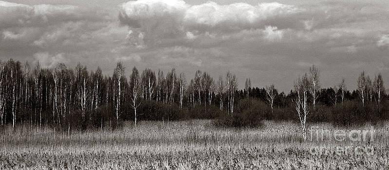Birch Wood by Jochen Schoenfeld