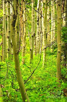 Birches Photography - Birches