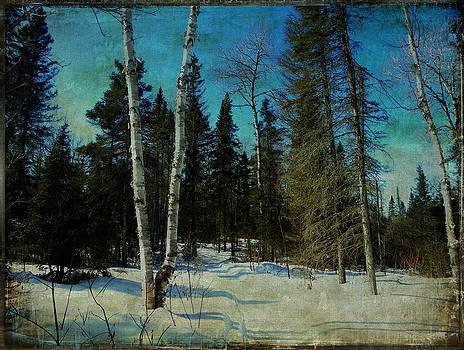 Birches  by Dianne  Lacourciere