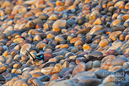 Bird and cobbles by Jean-Luc Baron