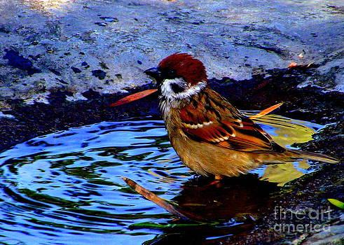 Shawna Gibson - Bird bath