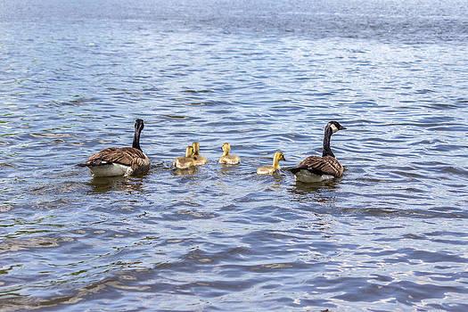 Bird Family by Terry Thomas