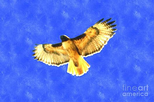 Bird Flying by Larry Stolle