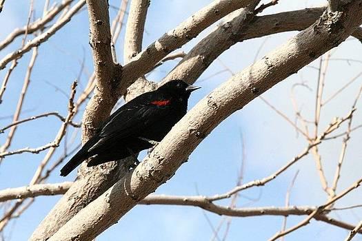 Bird by Houman Pazouki