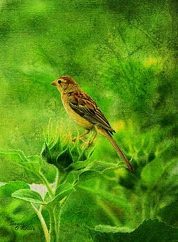 Bird In A Sunflower Field by Sandi OReilly