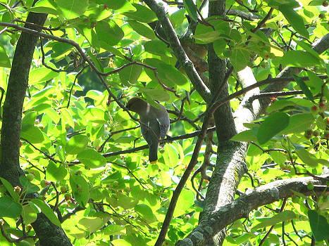 Bird in a Tree by Michele Wilson
