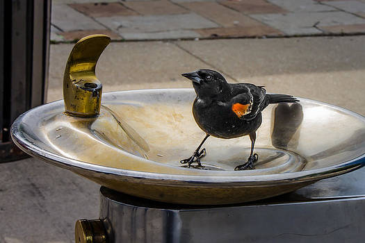Bird in a Water Fountain by Tom Gort