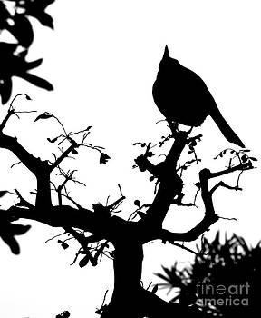 Shawna Gibson - Bird in Tree
