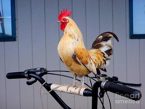 Mary Deal - Bird on A Bike