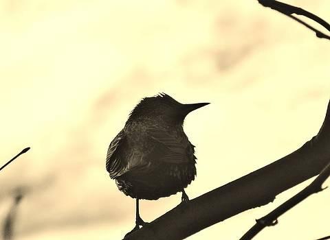 Bird on a Branch 2 by Mikki Cucuzzo