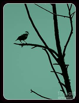 Bird on a Branch by Avis  Noelle