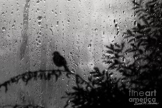 David Gordon - Bird On Branch in Window