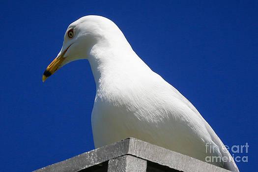 Bird on post by Jason Feldman
