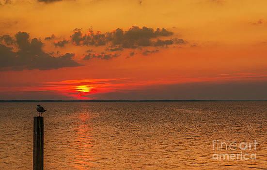 Randy Steele - Bird on Post Sunset Outer Banks