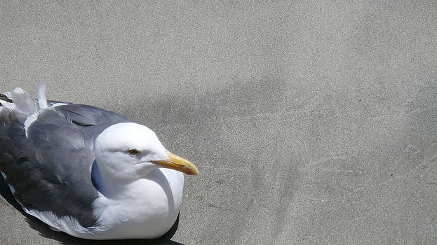 Bird On The Beach by Tonie Cook