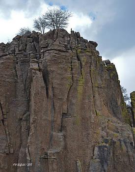 Allen Sheffield - Bird on the Pinnacle