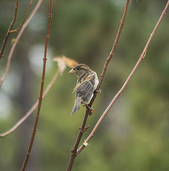 Bird pict 1 by Michel DesRoches