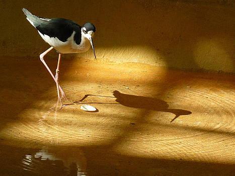 Bird Reflections by Adrienne Franklin
