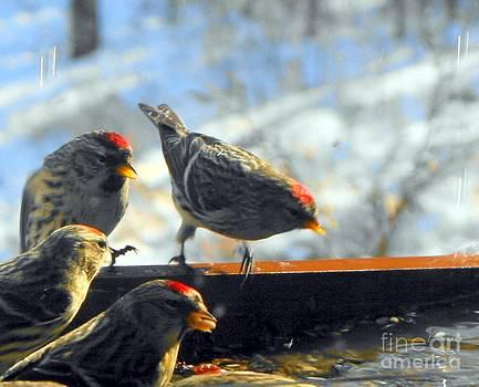 Bird Series Eight by Virginia Pakkala