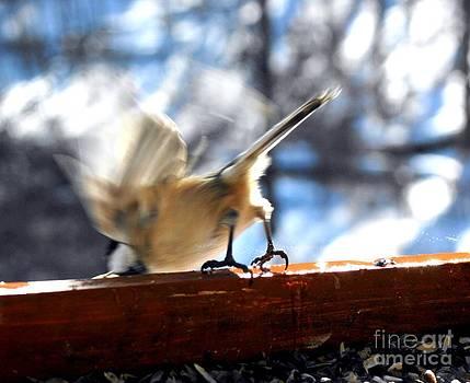 Bird Series Five by Virginia Pakkala