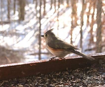 Bird Series Four by Virginia Pakkala