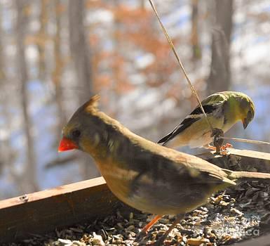 Bird Series one by Virginia Pakkala