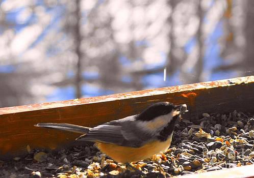 Bird Series Three by Virginia Pakkala
