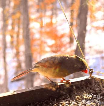 Bird Series Two by Virginia Pakkala