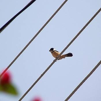 #bird #tiny #cute #nature #sweet by Monica Magallon