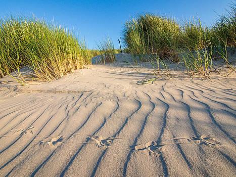 Bird traces in the sand dunes by Martin Liebermann