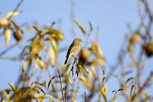 Bird watcher by Goyo Ambrosio