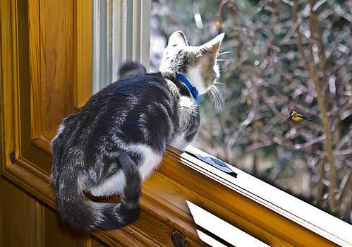 Bird Watching by Susan Leggett