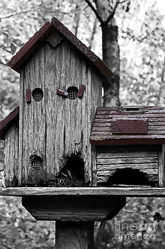 Birdhouse by Kristy Ollis