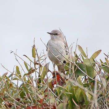 Birdie by Rebecca West