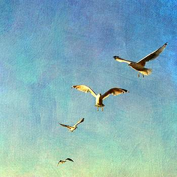 Birds Above by Michelle Calkins