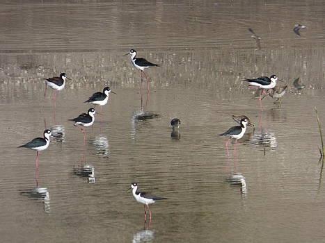 Birds and their reflections by Natalya Shvetsky