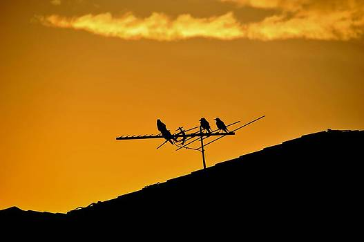 Birds at sunset 2 by Patrick OConnell