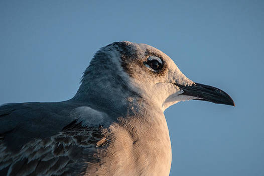 Birds Eye View by Brent Roberts
